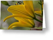 Sundrenched Greeting Card