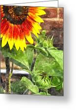Sunflower 3 Sf3wc Greeting Card