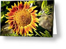 Sunflower And Bud Greeting Card