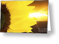 Sunflower And Sunset Greeting Card