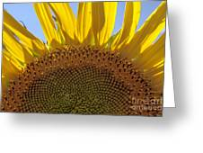Sunflower Arch Greeting Card