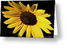 Sunflower At Dusk Greeting Card