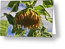 Sunflower At Fall Greeting Card