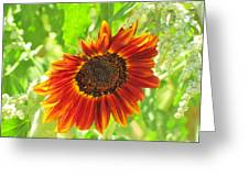 Sunflower Beauty Greeting Card