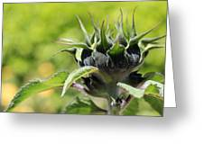 Sunflower Bud Greeting Card
