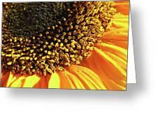 Sunflower Edge Greeting Card