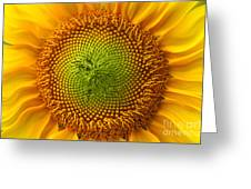 Sunflower Fantasy Greeting Card