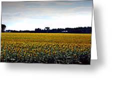 Sunflower Farm In North Dakota Greeting Card