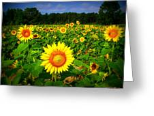 Sunflower Field Greeting Card by Melessia  Todd