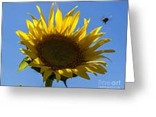 Sunflower For Snack Greeting Card