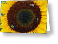 Sunflower Gathering Greeting Card