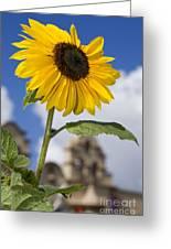 Sunflower In Balboa Park Greeting Card