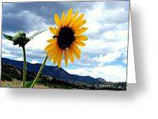 Sunflower In The Rockies With Friends Greeting Card by Donna Parlow
