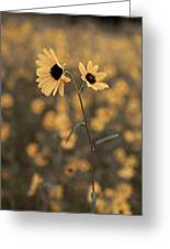 Sunflower In The Wild Greeting Card