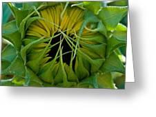 Sunflower Kisses Greeting Card