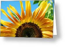 Sunflower Meets Sky Greeting Card