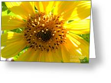 Sunflower No.10 Greeting Card