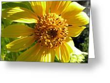 Sunflower No.11 Greeting Card