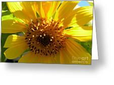 Sunflower No.15 Greeting Card