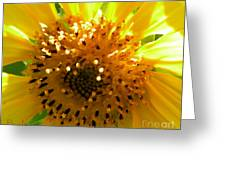 Sunflower No.16 Greeting Card
