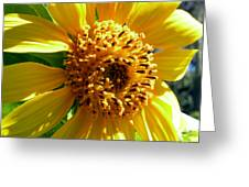 Sunflower No.19 Greeting Card