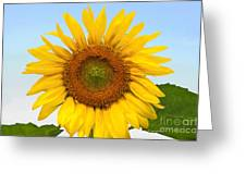 Sunflower On Blue Greeting Card