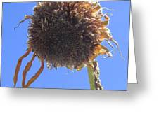Sunflower-one Greeting Card