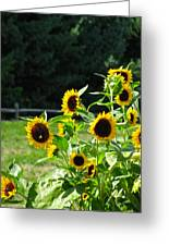 Sunflower Patch Greeting Card by Debra     Vatalaro