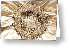 Sunflower Seeds Greeting Card