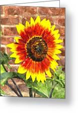 Sunflower Sfwc Greeting Card