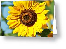 Sunflower Small File Greeting Card