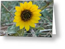 Sunflower Smile Greeting Card by Sara  Mayer