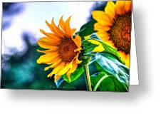 Sunflower Smile Greeting Card by Sarai Rachel