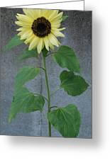 Sunflower Stalk  Greeting Card