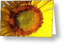 Sunflower Sunburst Greeting Card