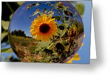 Sunflower Through A Glass Eye Greeting Card