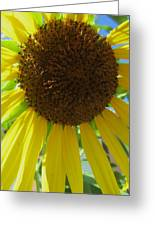 Sunflower-two Greeting Card