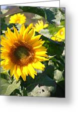 Sunflower Visitor Greeting Card