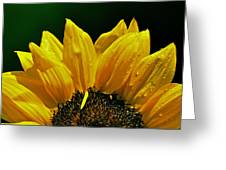 Sunflower With Drops Greeting Card