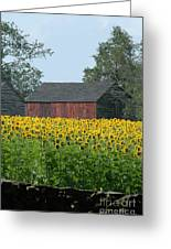 Sunflowers 8 Greeting Card