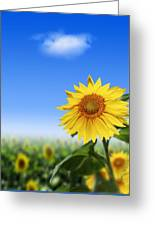 Sunflowers, Artwork Greeting Card by Victor Habbick Visions