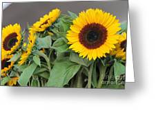 Sunflowers At Pikes Market Greeting Card