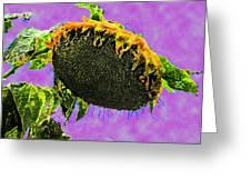 Sunflowers Birmingham Digital Greeting Card