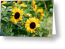 Sunflowers Greeting Card by Ivan SABO