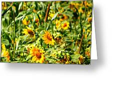 Sunflowers Greeting Card by Jennifer Compton
