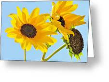 Sunflowers Sky Greeting Card