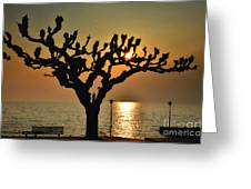 Sunlight And Tree Greeting Card