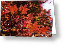 Sunlight Autumn Leaves Greeting Card