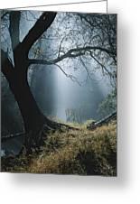 Sunlight Beams Through The Treetops Greeting Card