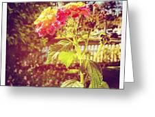 #sunlight #beautiful #flower Greeting Card